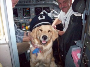 How to Prepare Your Dog for Air Travel