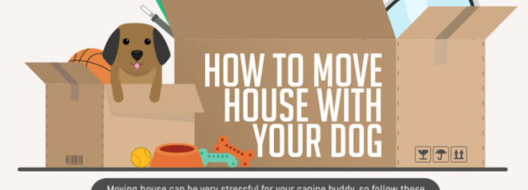 Dog moving tips