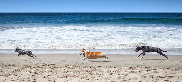 5 Best Dog-Friendly Beaches in the United States