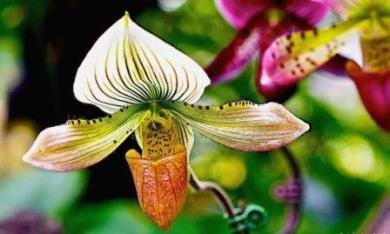 Crackdown on Orchid Smuggling in Assam