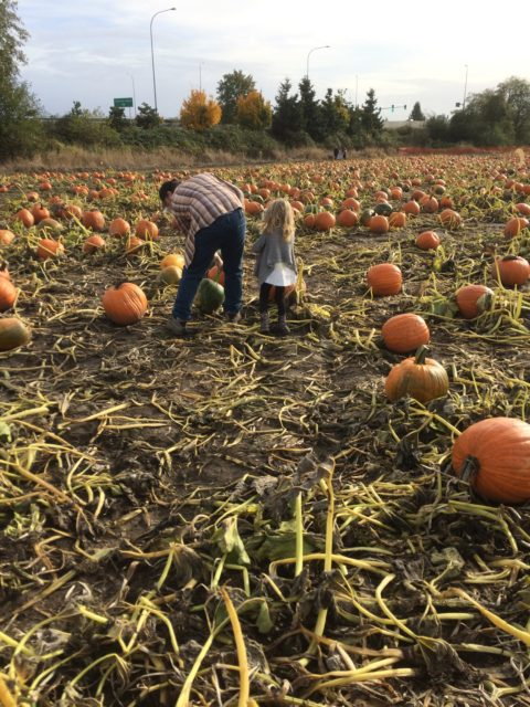 family in pumpkin patch
