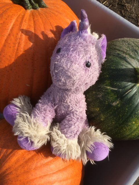 unicorn and pumkins