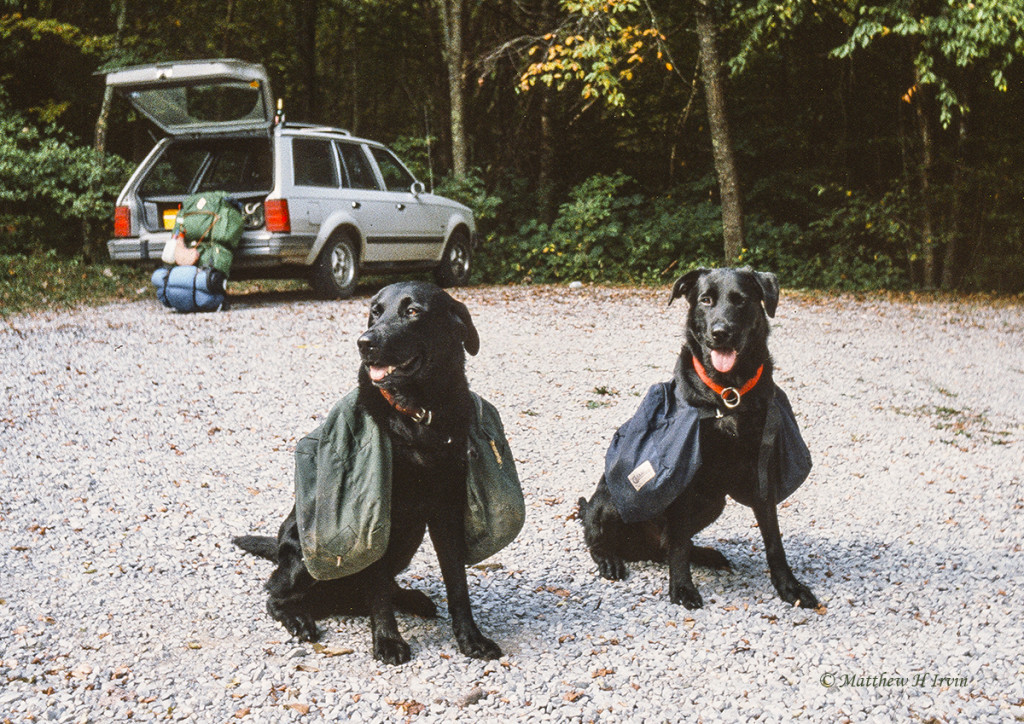 Two dogs ready for a hike.