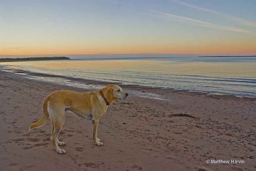 This is me at a beach where I am allowed not in the National Park. Even the little waves here were after me!