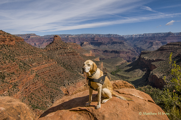 Woof, on the Bright Angel Trail in the Grand Canyon!