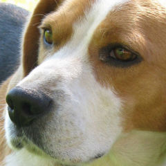 Omega-3 Supplements for your Dog's Health