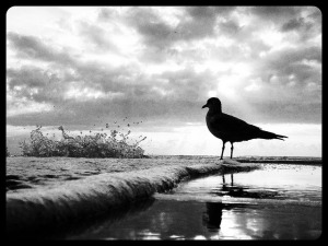 Seagull's Daydream by Andy Royston / Ft Lauderdale Sun