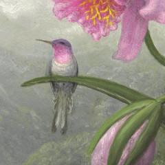 Gifts for Animal Lovers: Hummingbirds