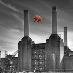 Has Anyone Seen Our Pig?