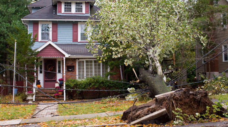 power outage caused by tree on power line