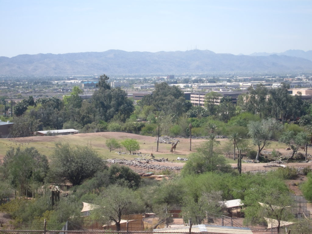 Enjoy a peak into the giraffe area at the Phoenix zoo from atop Hunt's tomb.