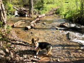 Richards Hollow Creek and Corgi