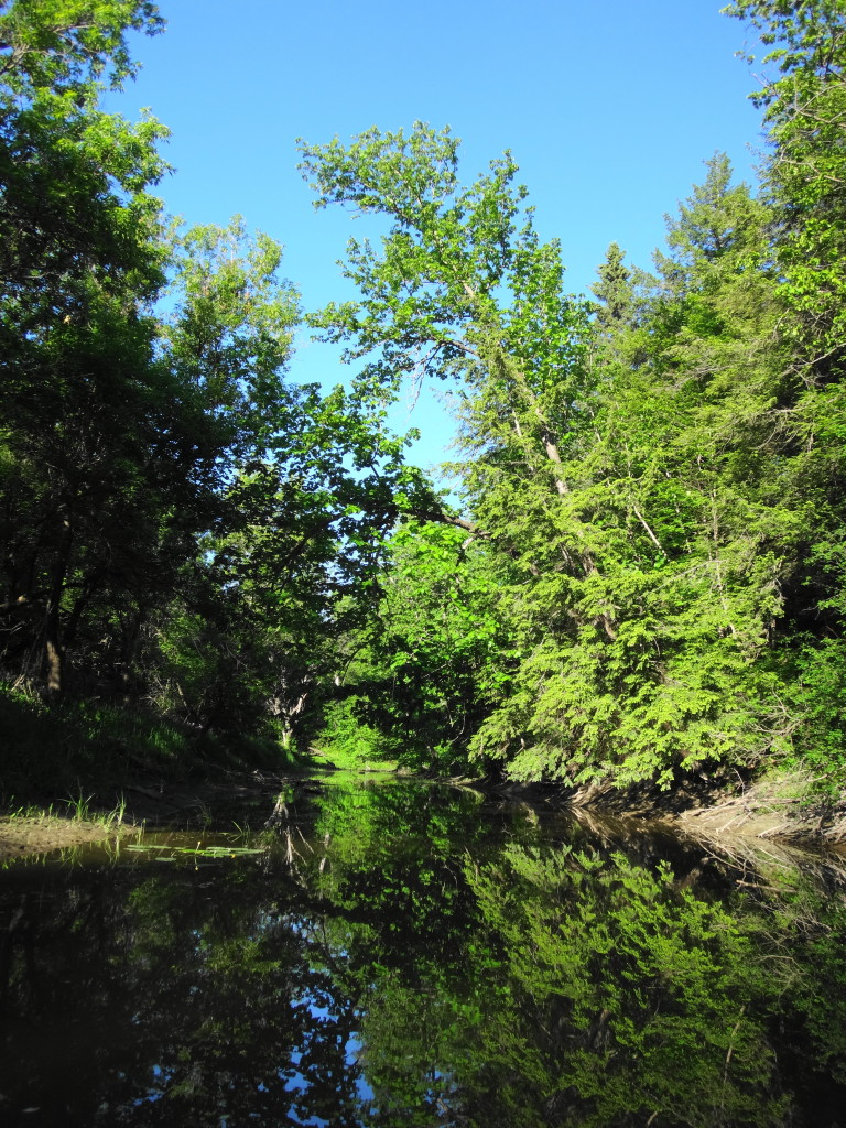 The dark waters of Cody Creek flow under overhanging trees, with the blue sky behind.