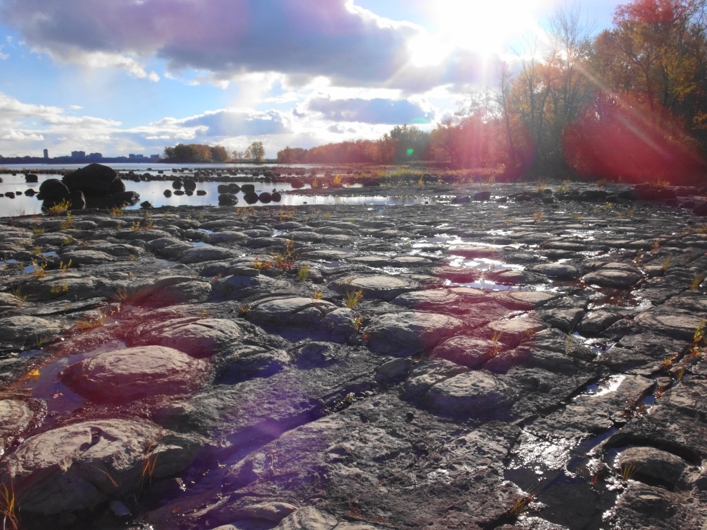 A low angle view across the cobbled bed of stromatolites, with the river, shoreline and a sun flare in the background.