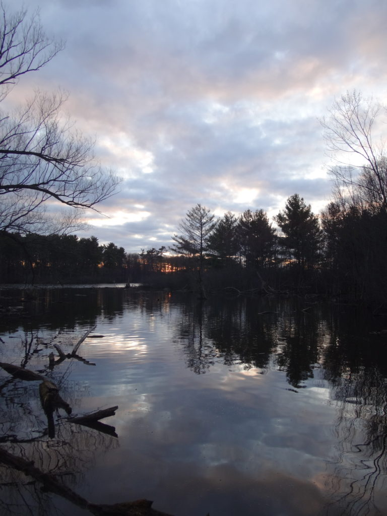 Dark trees and a silver sky reflect in the waters of Mud Lake.