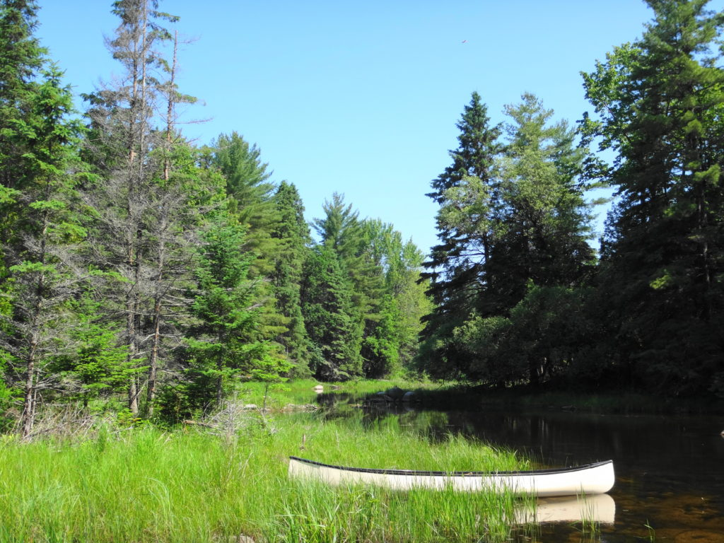 A canoe rests on the edge of a sedge meadow beside the Snye River.