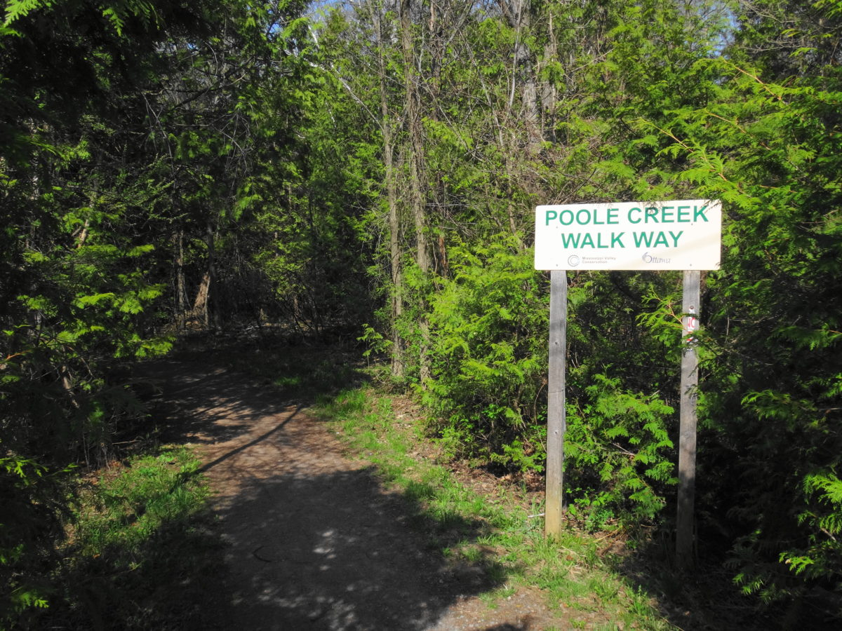 "A pathway disappears into a cedar forest. A sign reads, ""Poole Creek Walkway""."