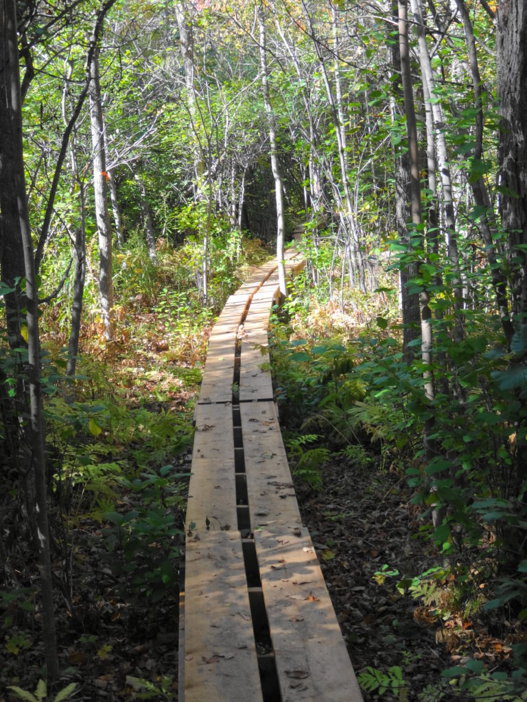 A narrow boardwalk crosses a swampy section of the Crazy Horse Trail.