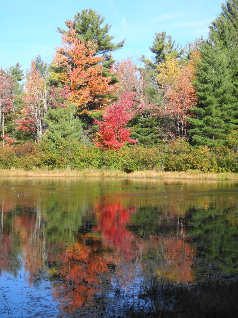 Red and gold trees reflect in a beaverpond.