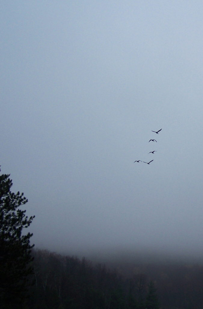 Five Canada geese fly over Green Lake on a misty spring morning