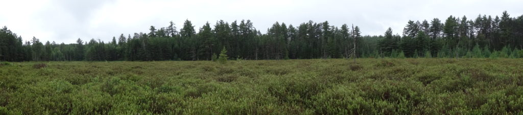 A wide-angle photography of a raised bog in the Petawawa Research Forest.