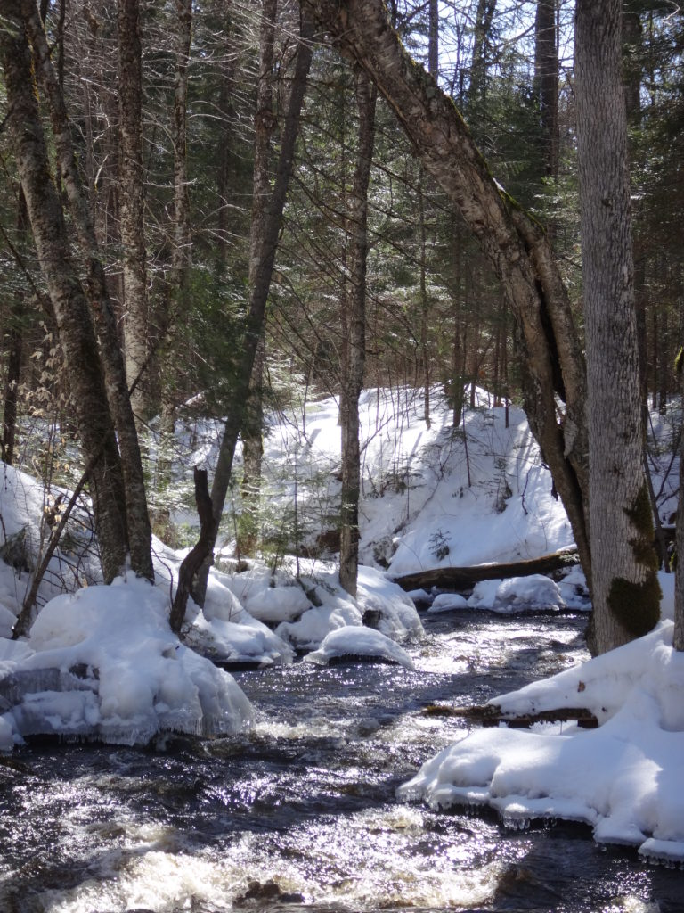 A forest creek runs swiftly between snow and ice-covered banks on a warm, late-winter day.