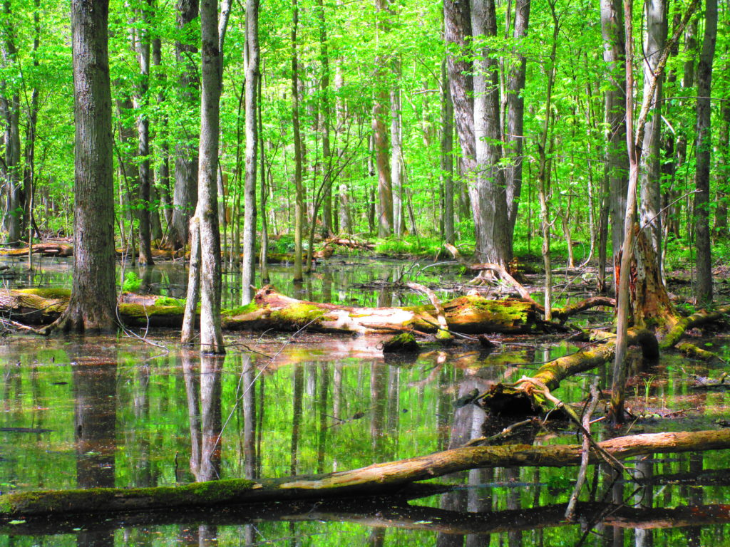 A forest pool lies under an emerald canopy of leaves.