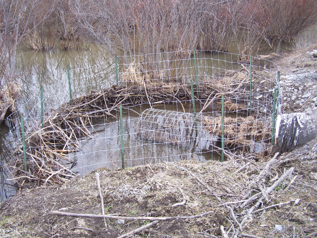 A beaver deceiver protects road culvert.