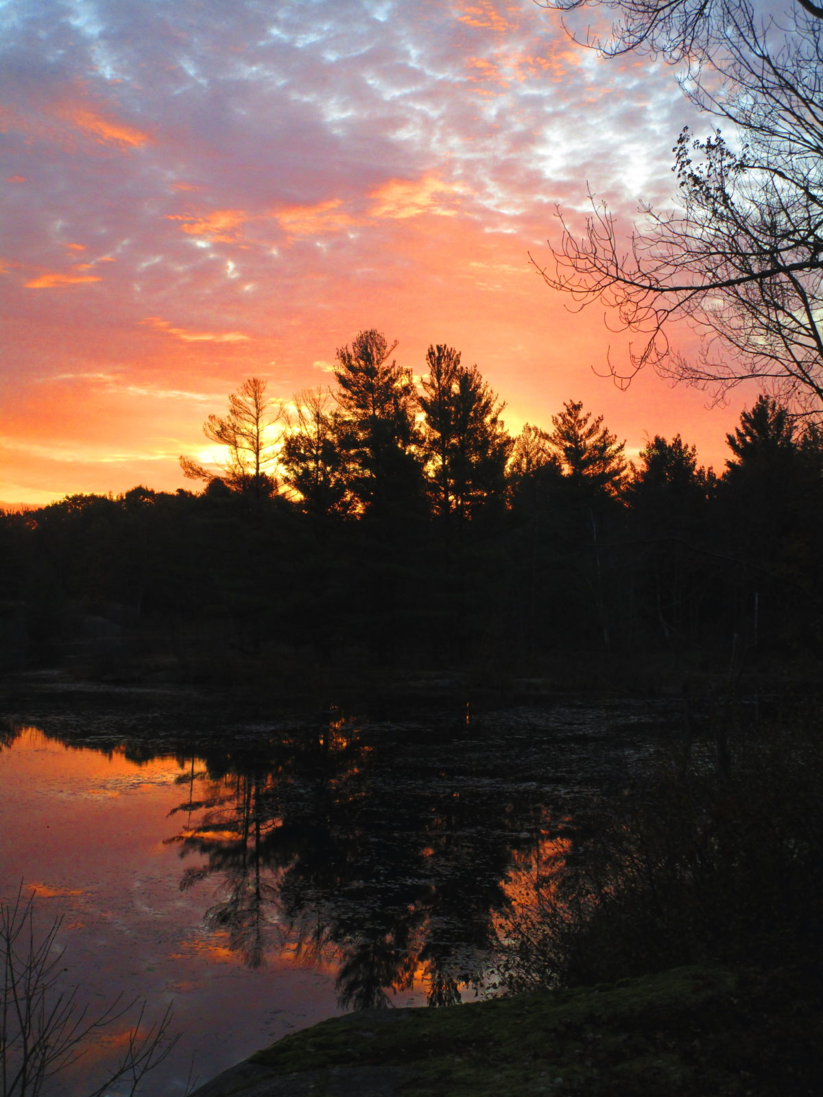 Across a pond, pine trees are silhouetted against a pink and blue dawn.