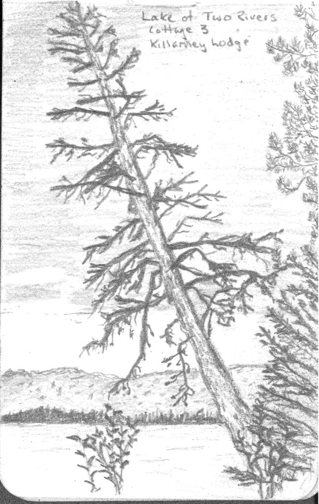 A pencil sketch of a dead cedar tree leaning over the Lake of Two Rivers, with the far shore in the background.