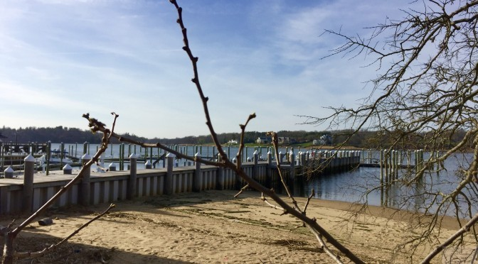 Focus: Budding, Blooming Fair Haven Spring