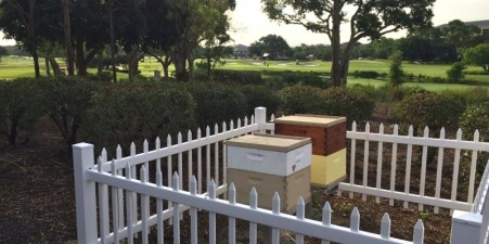Bee hives are fenced off on the Broken Sound Golf Course.