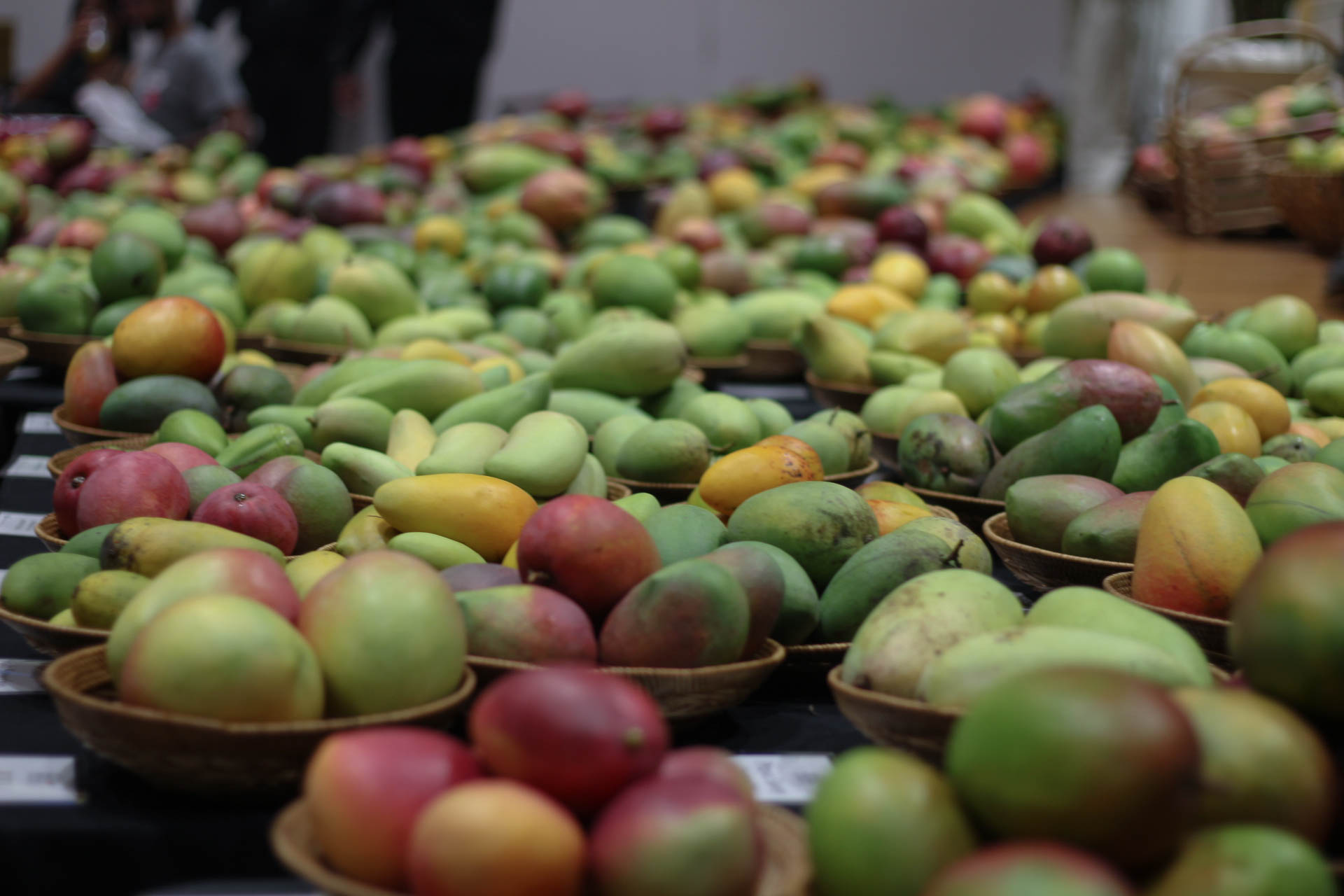 Hatcher Mango Hill opens farm stand