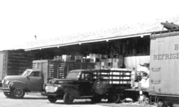'Life on the Farm' – the 'PACKING HOUSE' (Part 2)