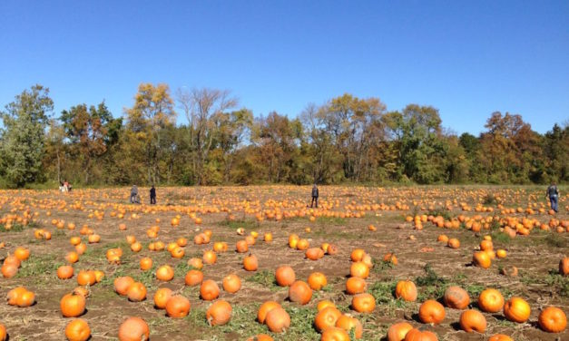 The 10 Best Pumpkin Patches in Florida