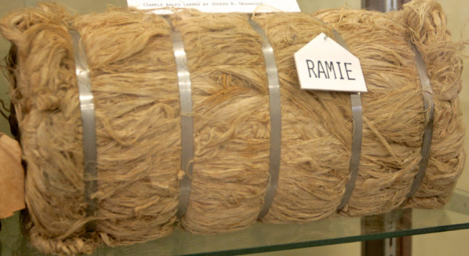This bale of harvested ramie was lent to the Lawrence E. Will Museum of the Glades by Joseph Orsenigo, an agricultural researcher at the Everglades Research & Education Center. Mr. Orsenigo died in 2009. / J.D. Vivian