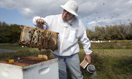 So You Want to Save the Bees?