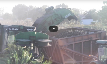 Mechanized sugar-cane harvest a fascinating spectacle