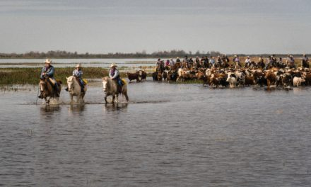 After 5 centuries, Florida cowboys still doing well