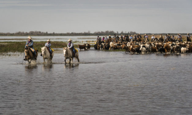 Book lets readers relive Great Florida Cattle Drive