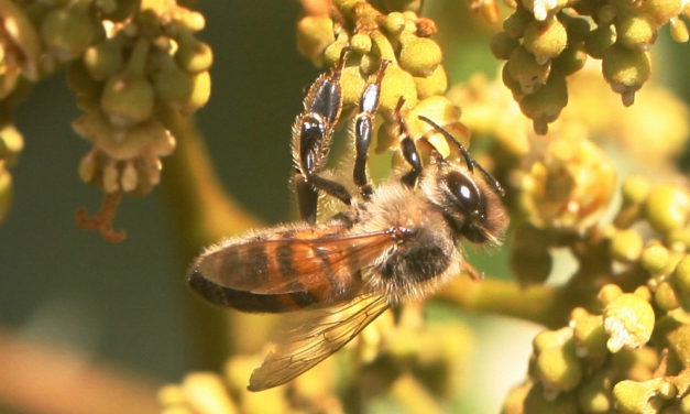 Tiny artificial bees might one day help crops — and consumers