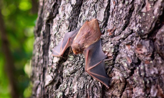 What you need to know about bats