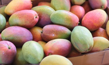 Mango Tasting and Farm Tour with Chef de Cuisine Manlee Siu