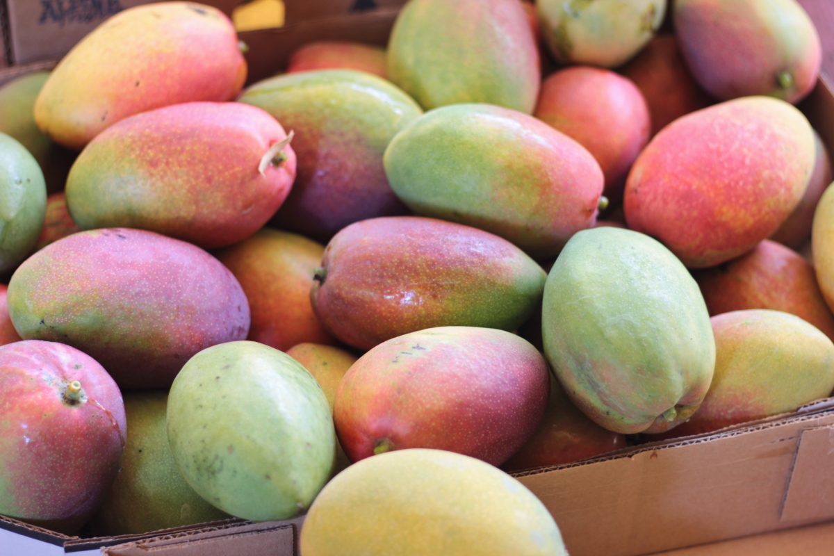 Enjoy a mango tasting and farm tour with Chef de Cuisine Manlee Siu / contributed