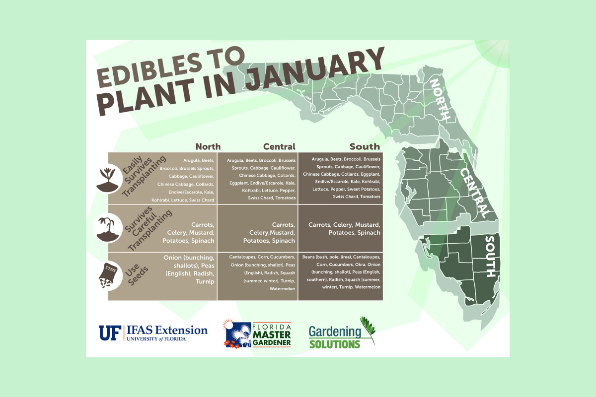 What to plant in January in Florida — Florida Food & Farm