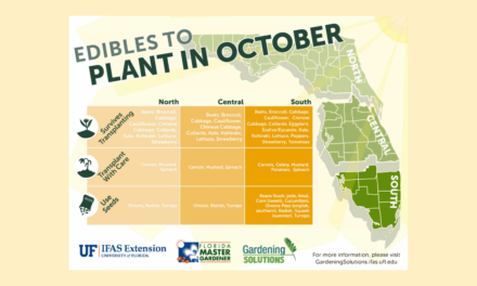 What to plant in October in Florida