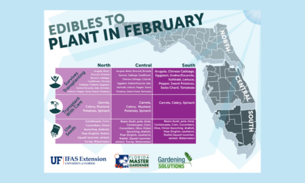 What to plant in February in Florida