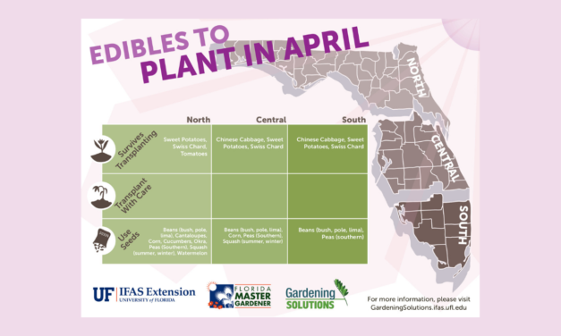 What to plant in April in Florida