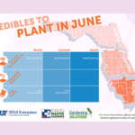 What to Plant in June in Florida