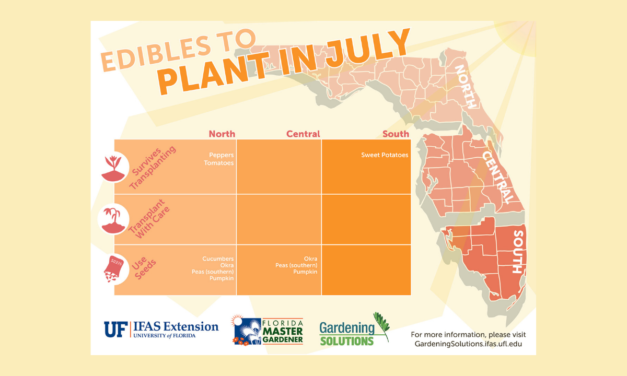What to plant in July in Florida